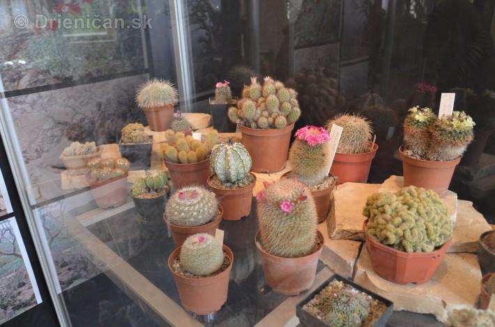 Kaktusy v botanickej zahrade kosice_039