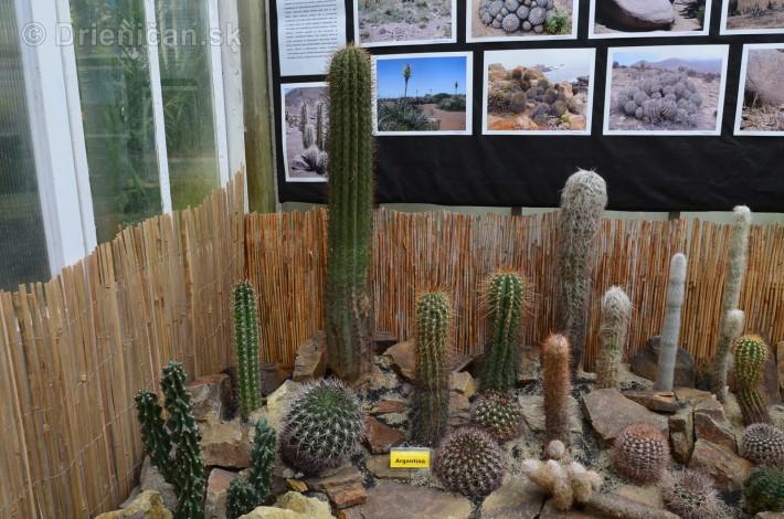 Kaktusy v botanickej zahrade kosice_040