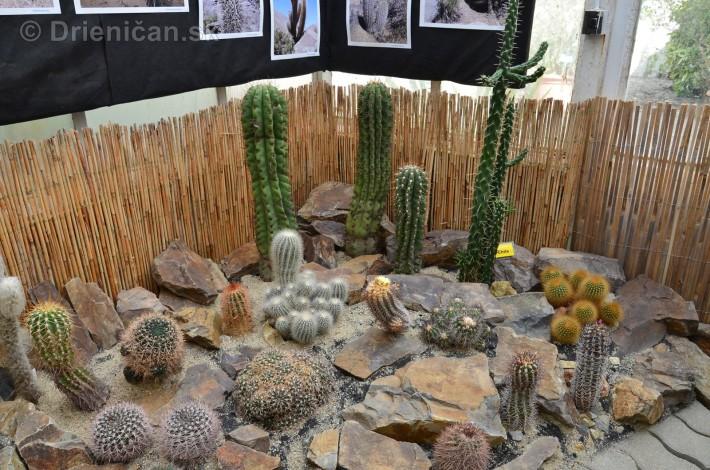 Kaktusy v botanickej zahrade kosice_041