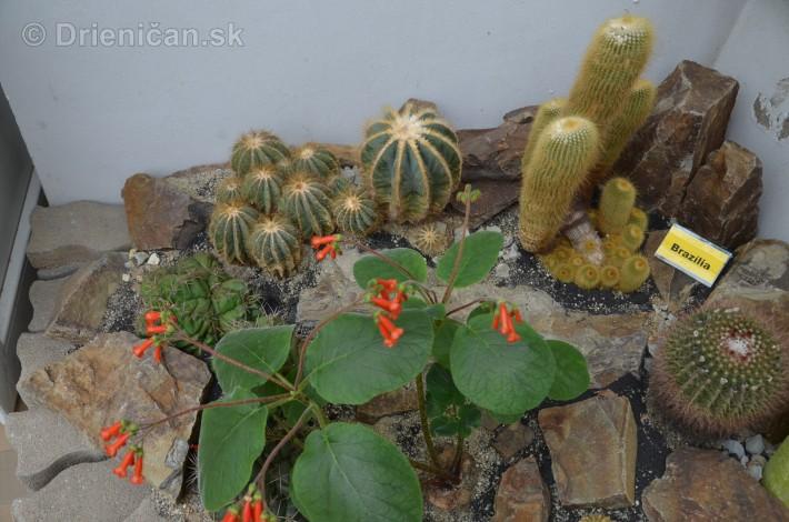 Kaktusy v botanickej zahrade kosice_043