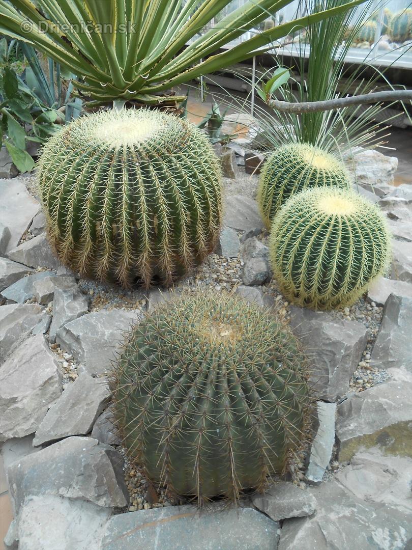 Kaktusy v botanickej zahrade kosice_050