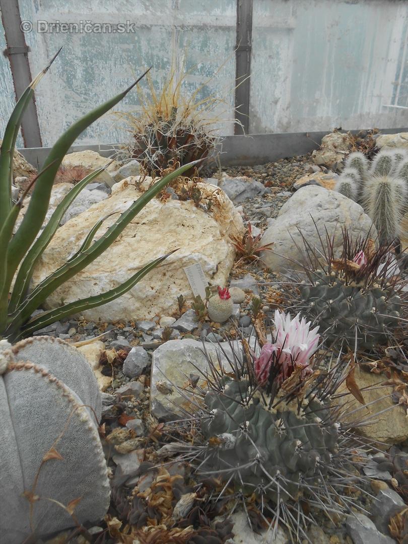 Kaktusy v botanickej zahrade kosice_055