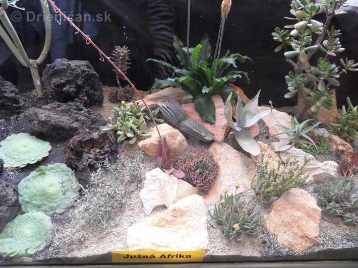 Kaktusy v botanickej zahrade kosice_058