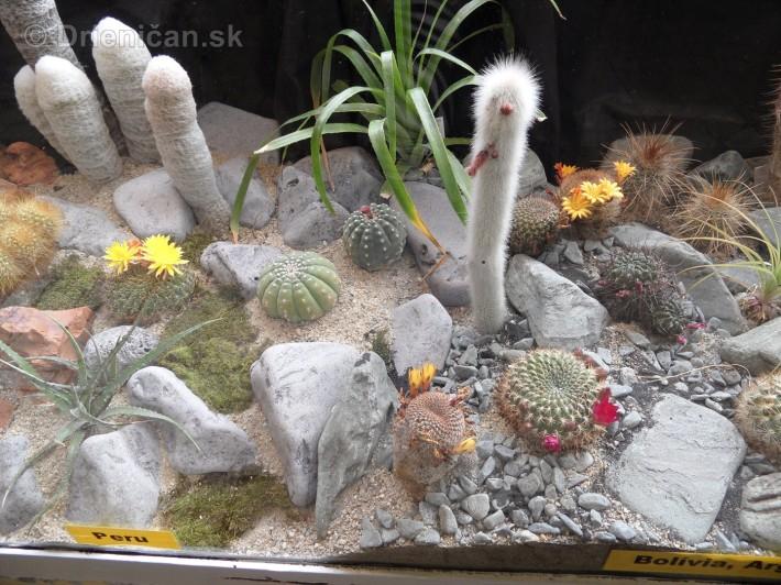 Kaktusy v botanickej zahrade kosice_059