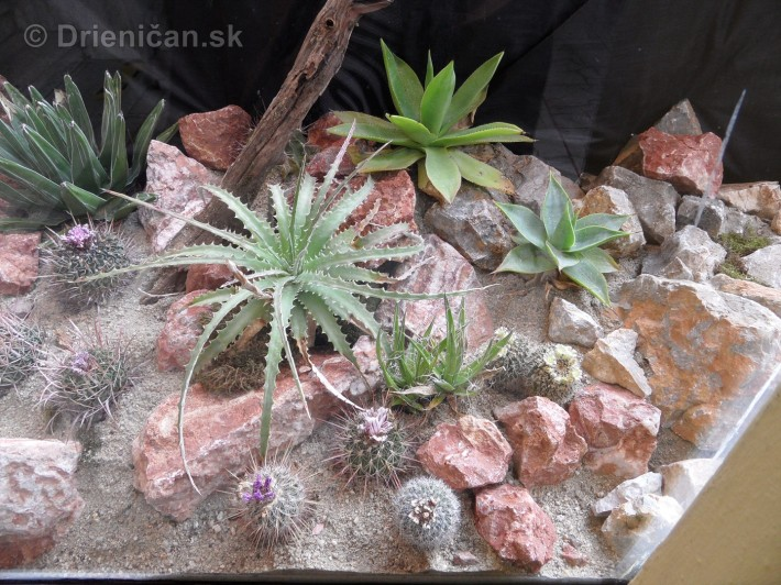 Kaktusy v botanickej zahrade kosice_063