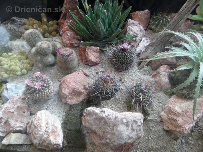 Kaktusy v botanickej zahrade kosice_064