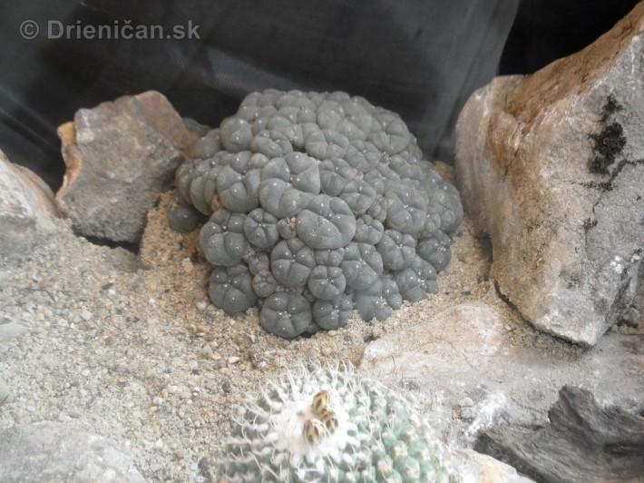 Kaktusy v botanickej zahrade kosice_067