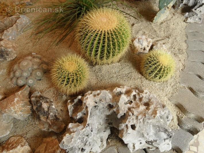 Kaktusy v botanickej zahrade kosice_071