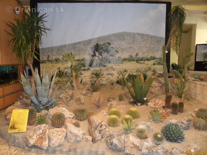 Kaktusy v botanickej zahrade kosice_076
