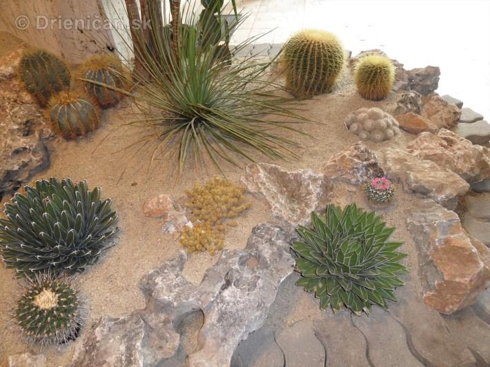 Kaktusy v botanickej zahrade kosice_078