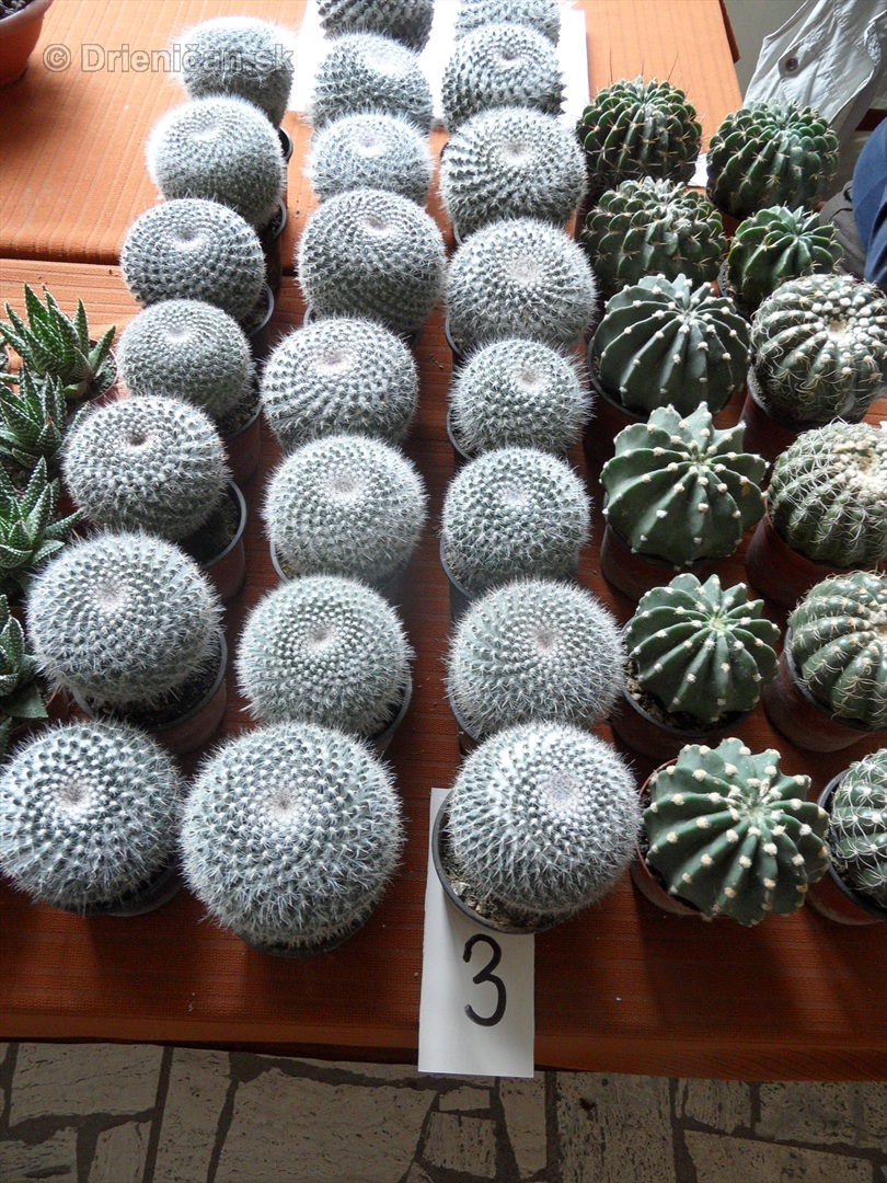 Kaktusy v botanickej zahrade kosice_079