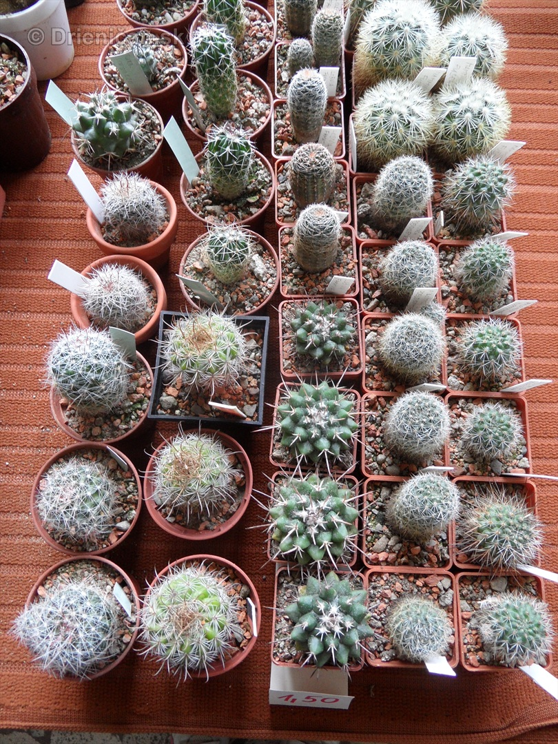 Kaktusy v botanickej zahrade kosice_084