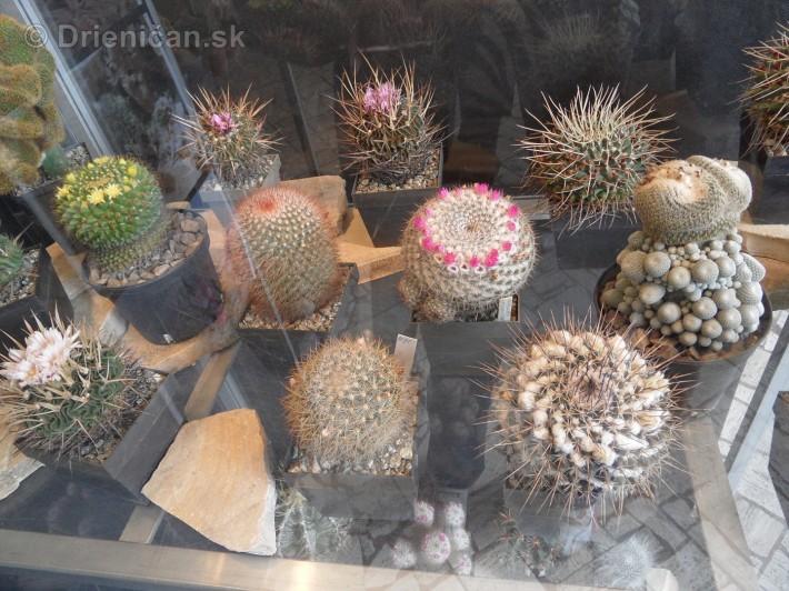 Kaktusy v botanickej zahrade kosice_086