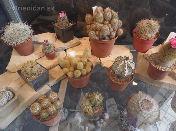 Kaktusy v botanickej zahrade kosice_090