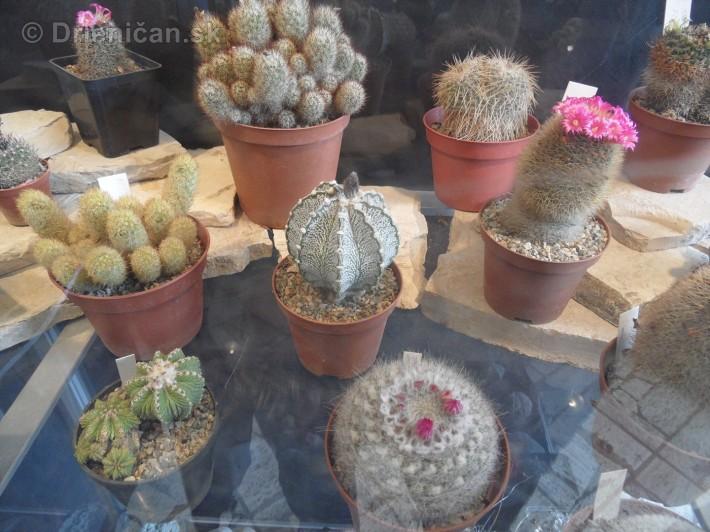 Kaktusy v botanickej zahrade kosice_091