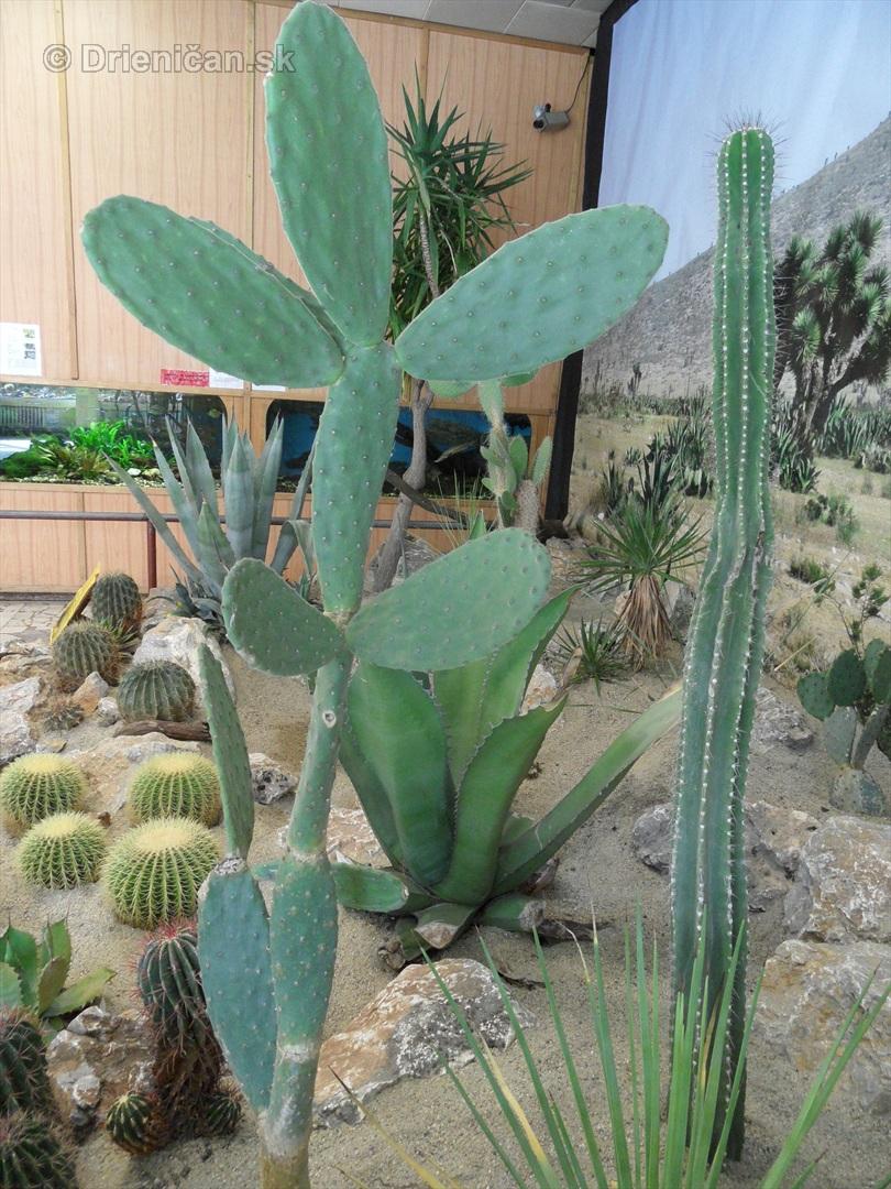 Kaktusy v botanickej zahrade kosice_096