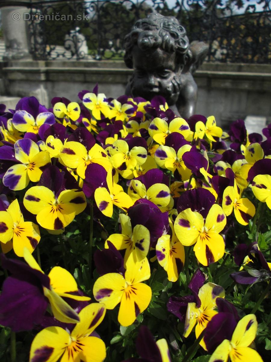Spring in Powerscourt Gardens_03