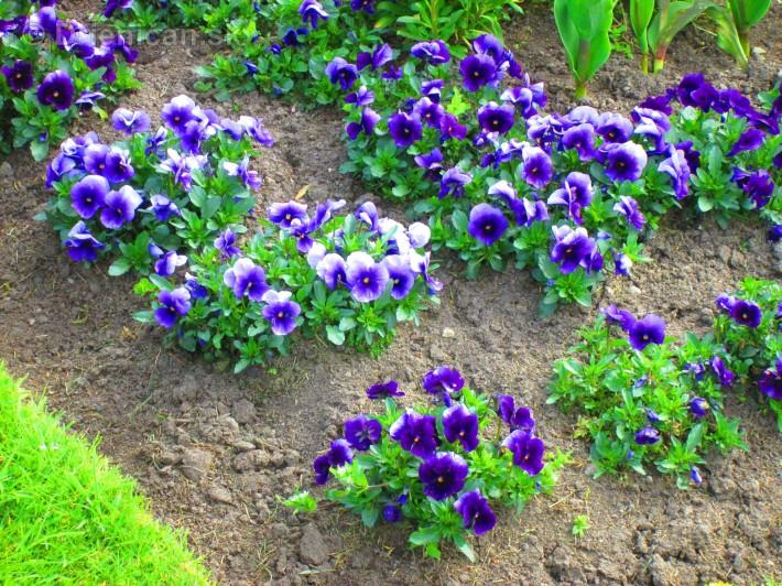 Spring in Powerscourt Gardens_08