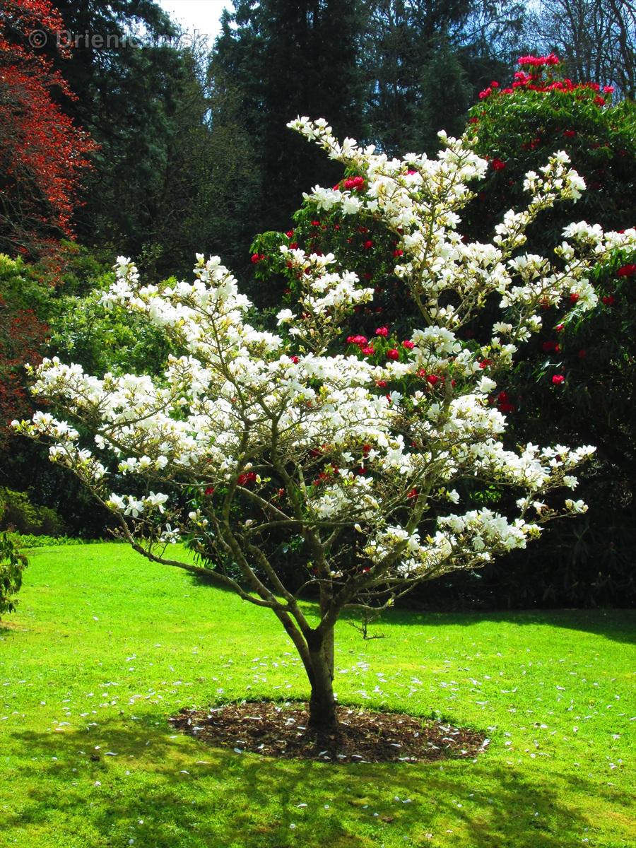 Spring in Powerscourt Gardens_15