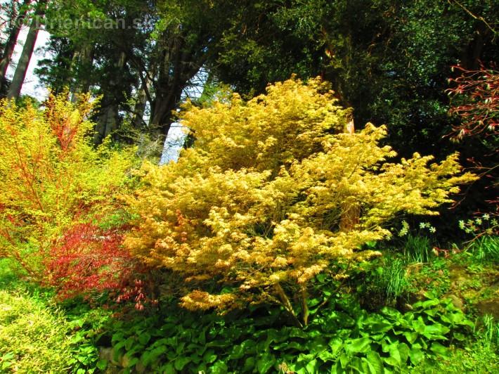 Spring in Powerscourt Gardens_16
