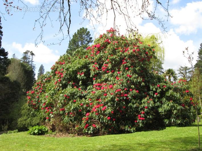 Spring in Powerscourt Gardens_17