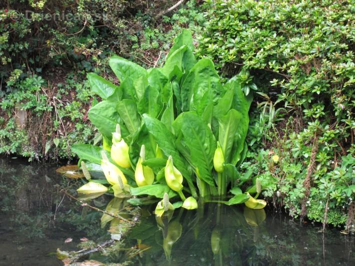 Spring in Powerscourt Gardens_19