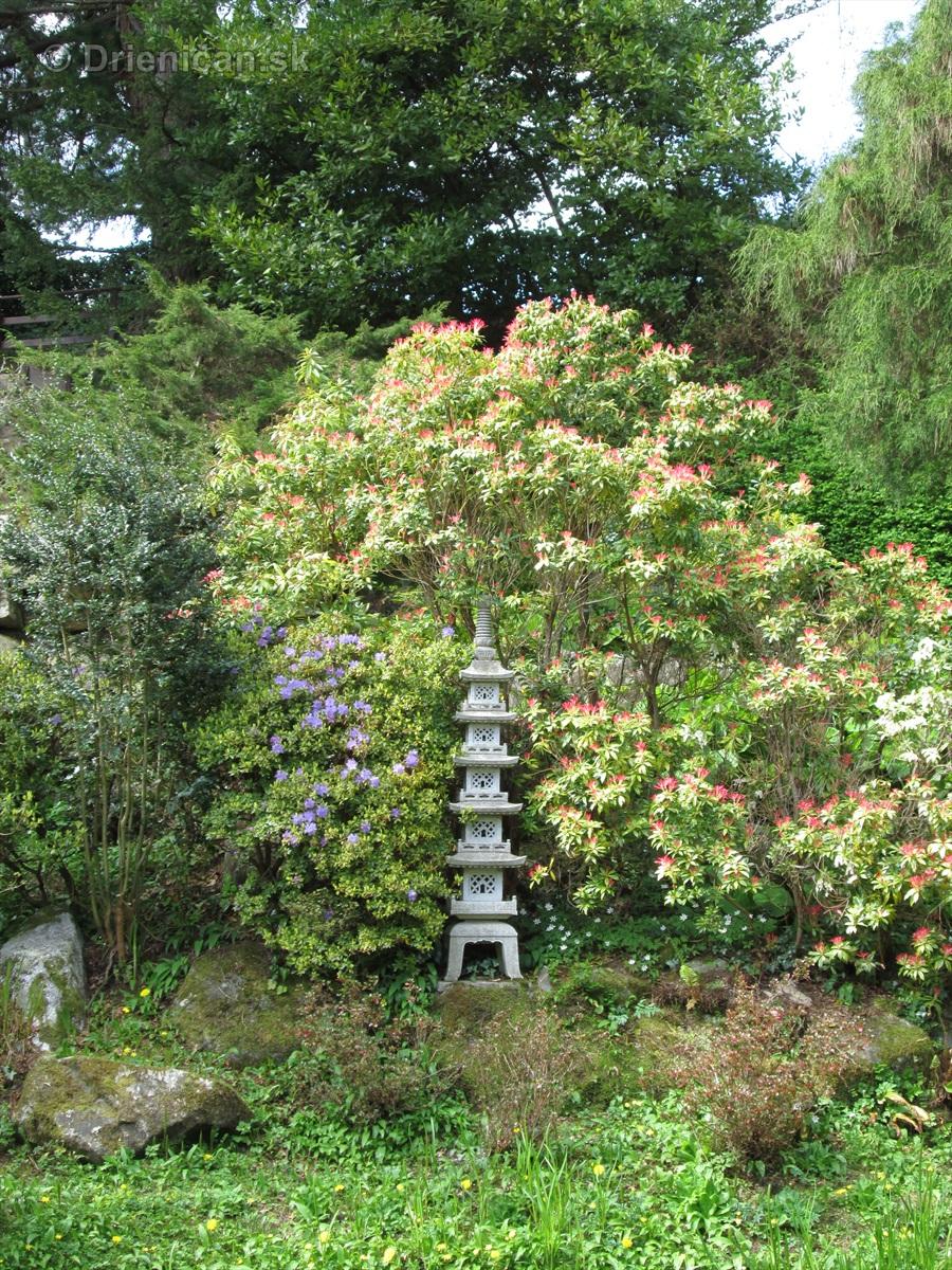 Spring in Powerscourt Gardens_20