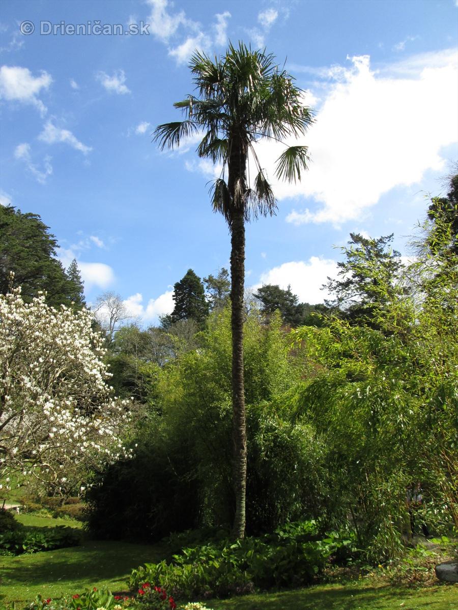 Spring in Powerscourt Gardens_21