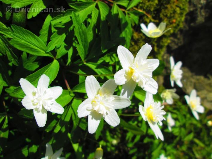 Spring in Powerscourt Gardens_24