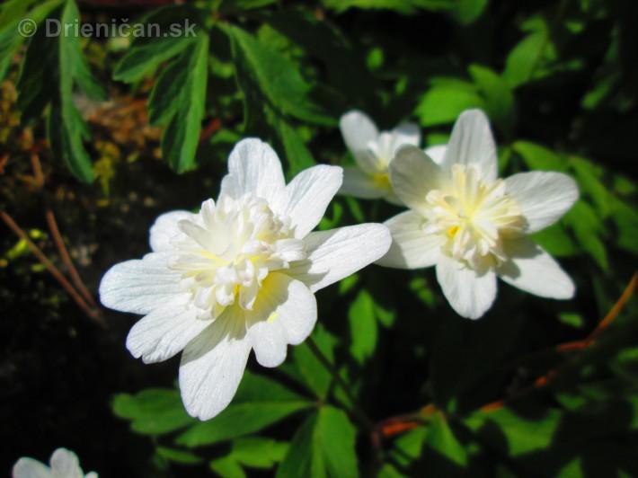 Spring in Powerscourt Gardens_25