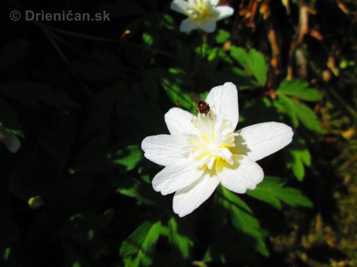 Spring in Powerscourt Gardens_26