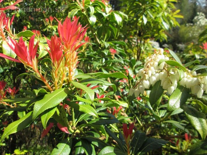 Spring in Powerscourt Gardens_28