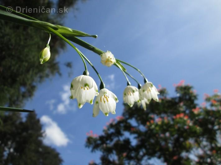 Spring in Powerscourt Gardens_30