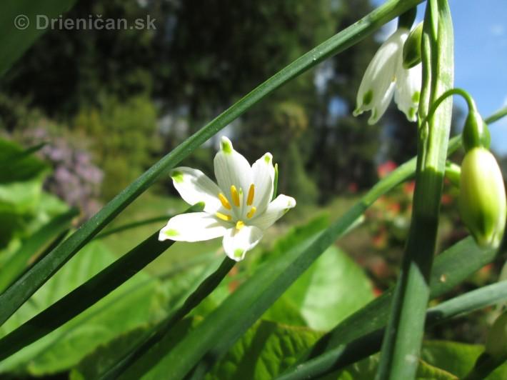 Spring in Powerscourt Gardens_31