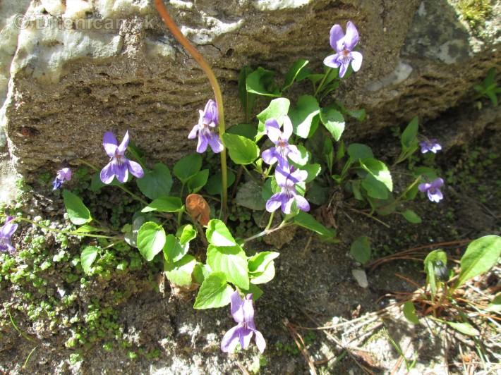 Spring in Powerscourt Gardens_32