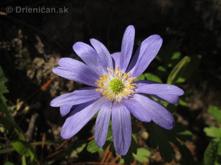 Spring in Powerscourt Gardens_33