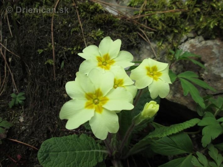 Spring in Powerscourt Gardens_34