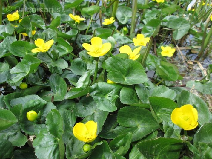 Spring in Powerscourt Gardens_40