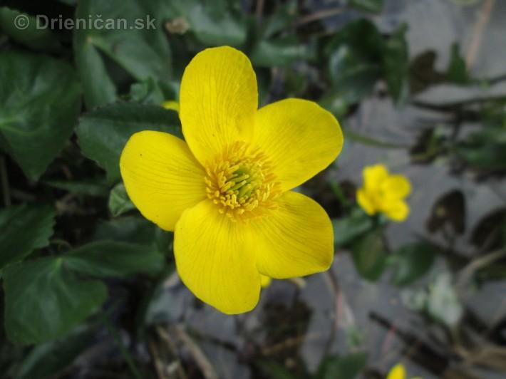Spring in Powerscourt Gardens_41