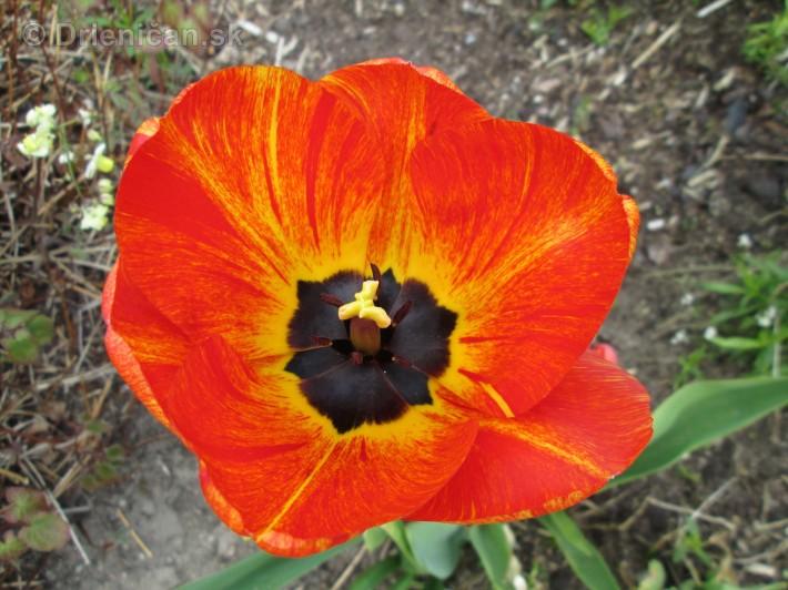 Spring in Powerscourt Gardens_47