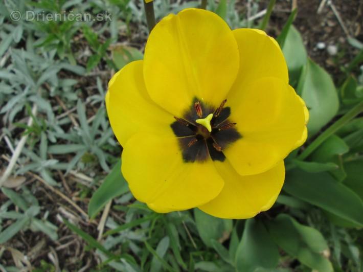 Spring in Powerscourt Gardens_49