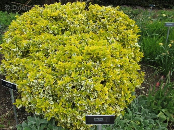 Spring in Powerscourt Gardens_50