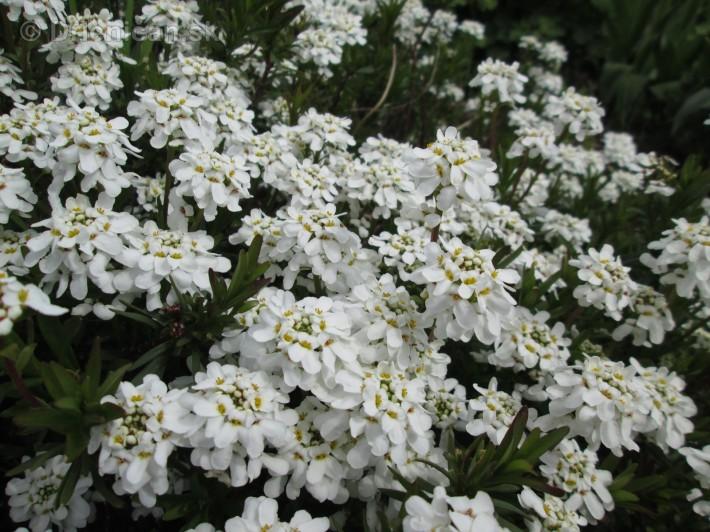 Spring in Powerscourt Gardens_51