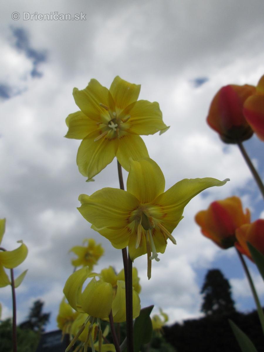 Spring in Powerscourt Gardens_52