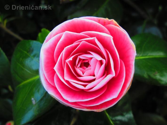 Spring in Powerscourt Gardens_58