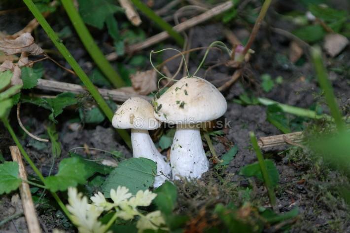 Zahradne Majovky_04
