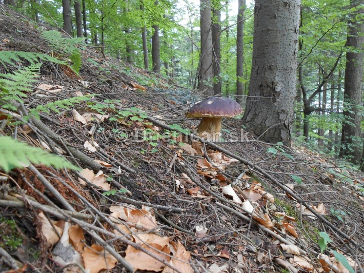 Význam húb v prírode, Hriby