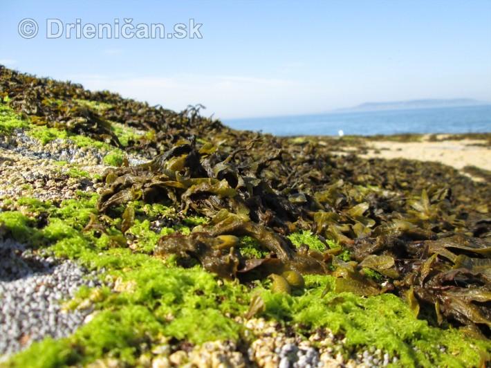 Morské riasy počas odlivu, tiež čakajú na slanú morskú vodu...