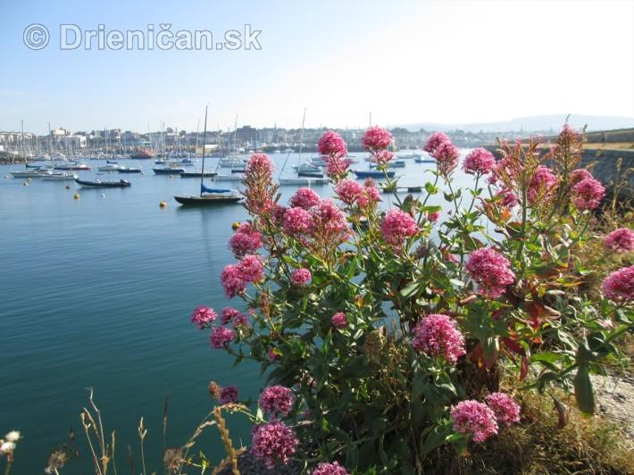 Aj takéto pekné kvety lemujú múry prístavu