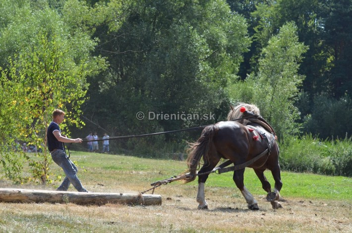 furmanske preteky o zlaty kantar 2013 Lutina_004